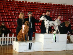 CARRIE ANN CAC,CACIB, BOB, res.BIG
